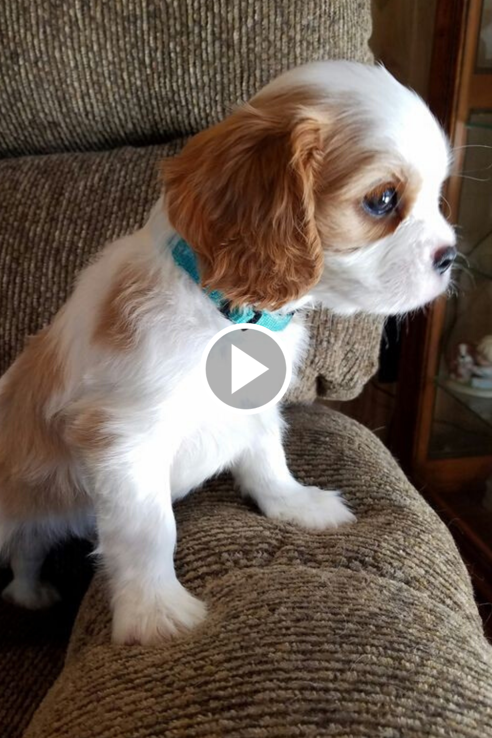 Cutest Dog Videos Ever Cute Dogs Baby Dogs Cute Baby Animals