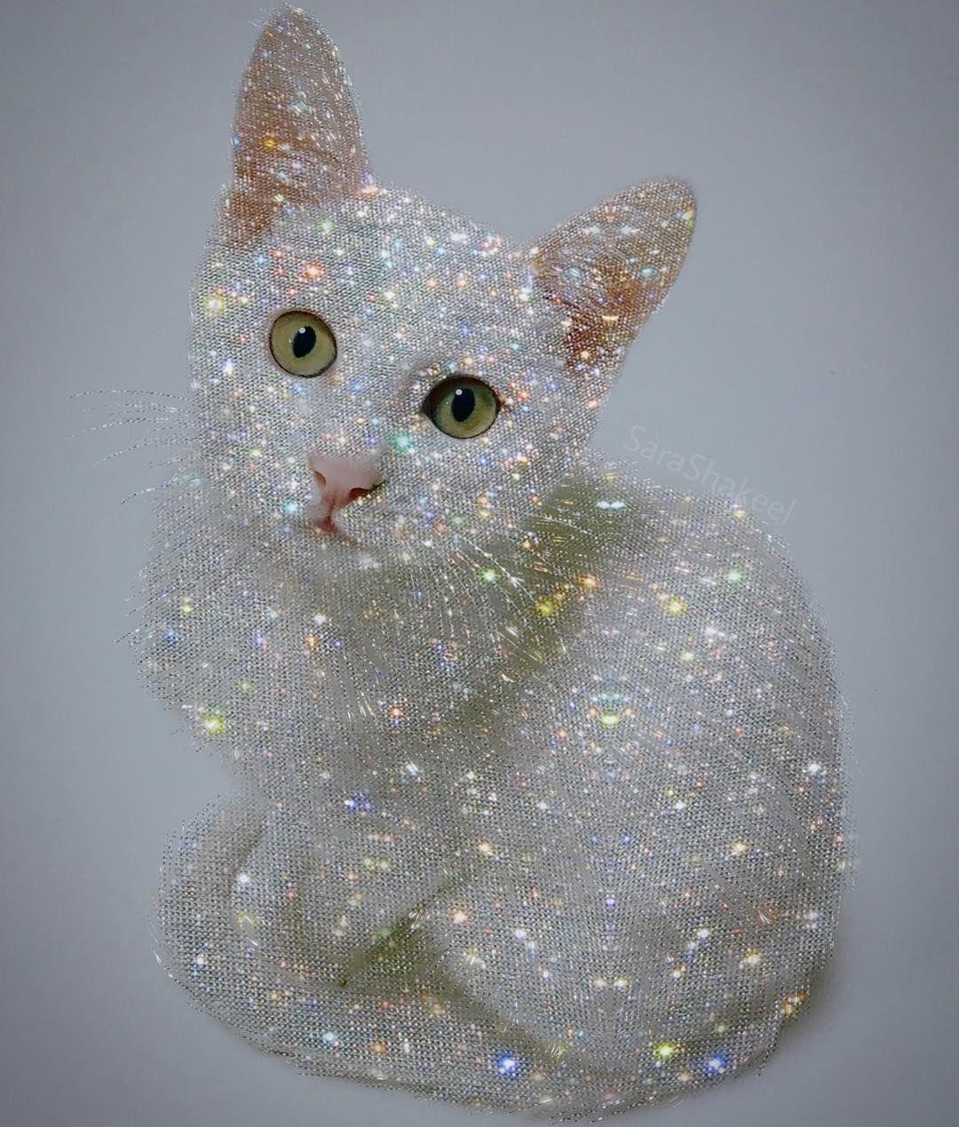 Картинки с котятами блестящие