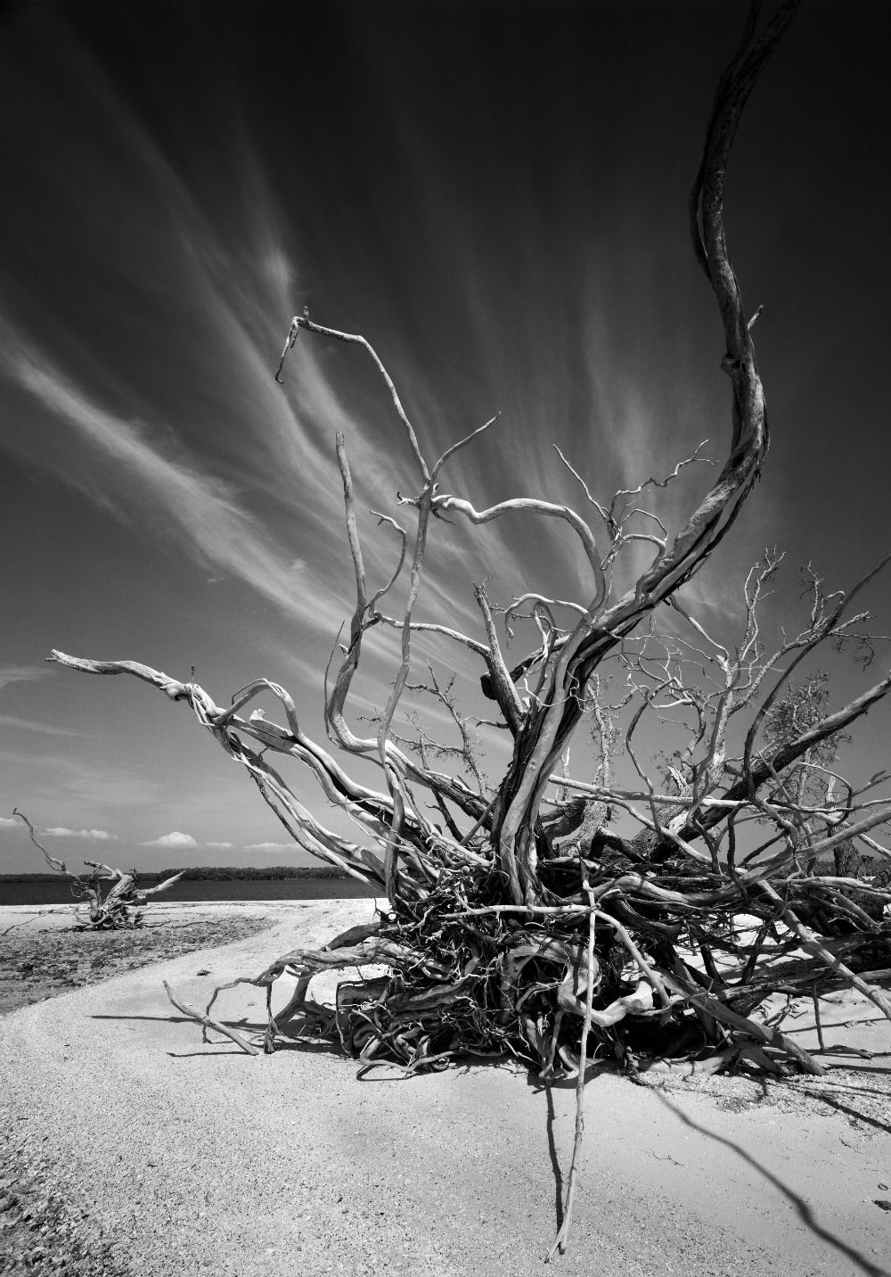 Clyde Butcher Black And White Landscape Nature Photography Black And White Photography
