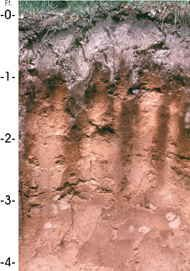 Michigan State Soil Kalkaska Sand Outdoor Education Soil