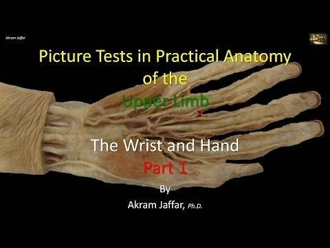 16+ Picture test in anatomy wrist and hand 1