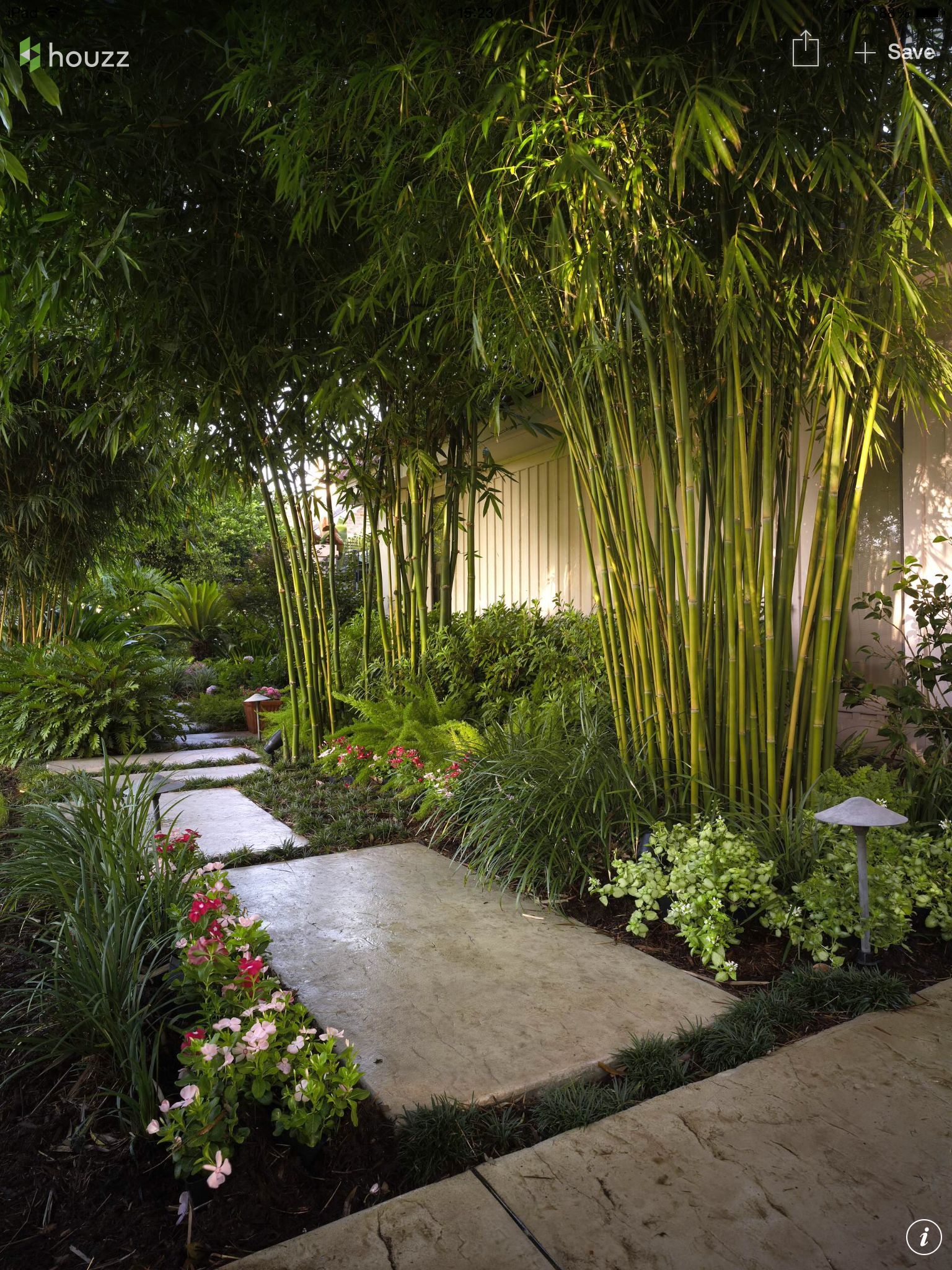 Love the bamboo and lighting Landscaping Pinterest
