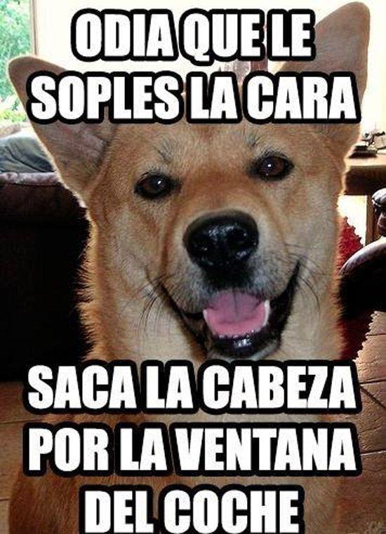 Odia Que Le Soples La Cara Saca La Cabeza Por La Ventana Del Coche Humor My Animal Animal Lover