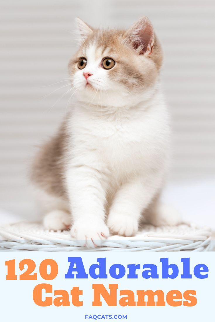 120 Adorable Unisex Tabby Cat Names Cat names, Boy cat