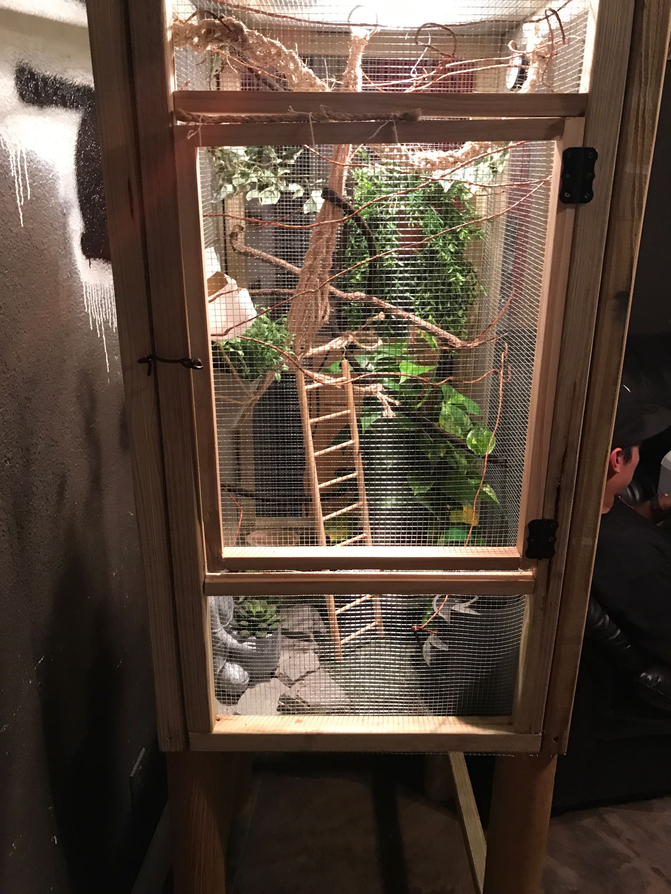 Homemade Chameleon Screen Cage I M Sure You Can Probably Build It