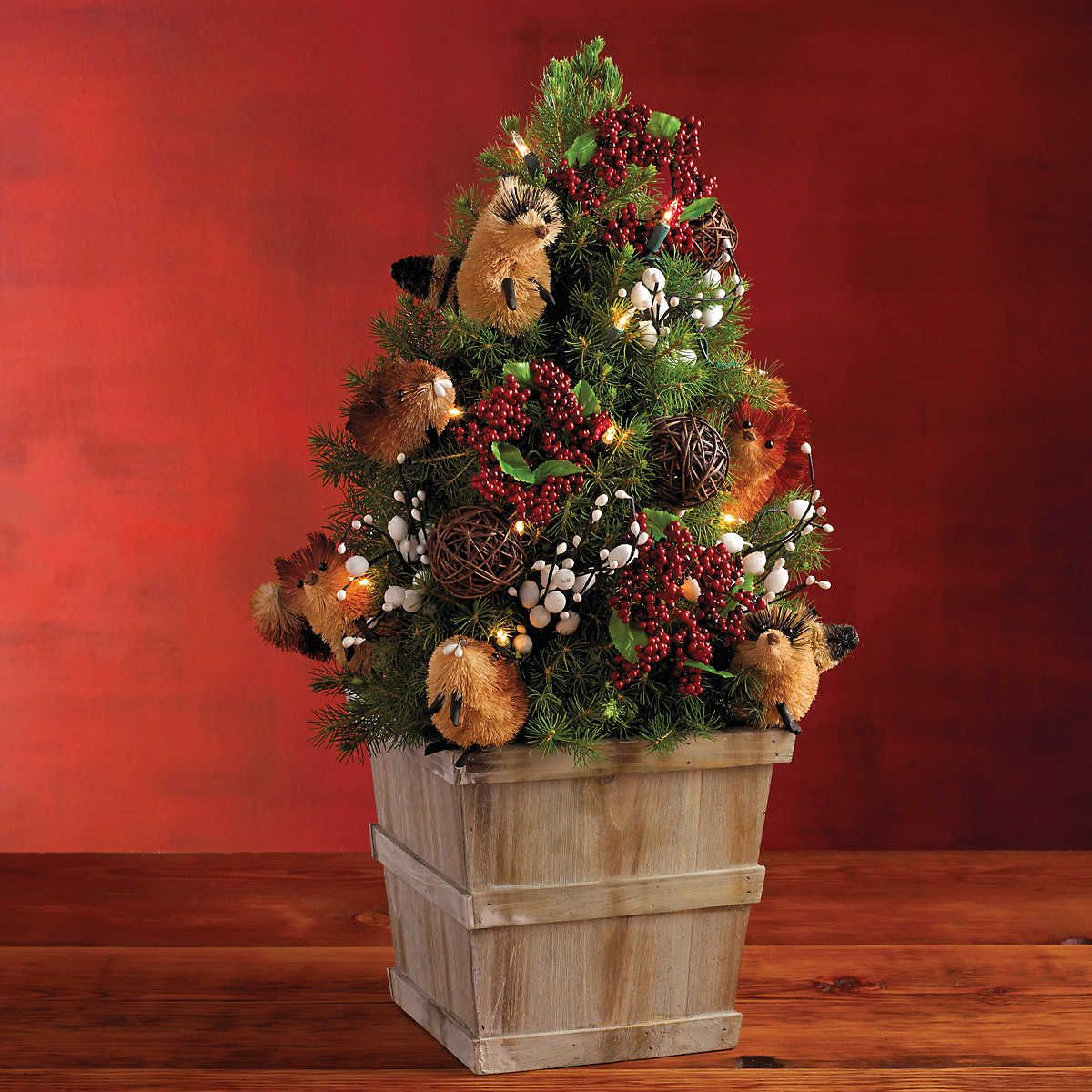 order the woodland mini christmas tree one of the many live tabletop christmas trees delivered from harry david - Live Mini Christmas Tree