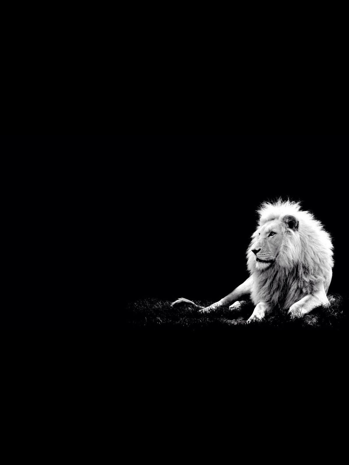 Iphone 5s wallpaper tumblr white - Lion Black And White Wallpaper Tumblr Wallpaperiphone 5