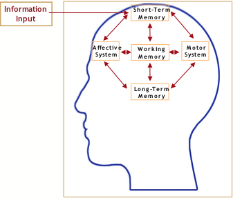 Memory Concept Map.Figure 2 Schematic Showing The Key Memory Systems In The Brain