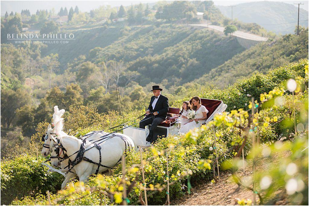 Bride Rides In On A Horse Drawn Carriage At Serendipity Garden Weddings Oak Glen