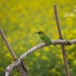 Photo of the Day | April 26 | Cute Little Green Bee Eater, by Shahnaz Parvin