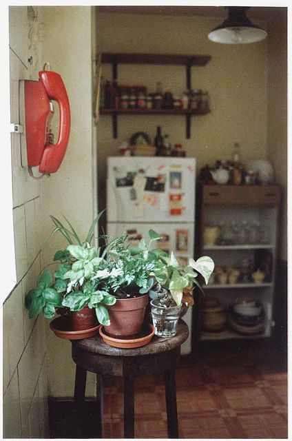 potted plants in the kitchen