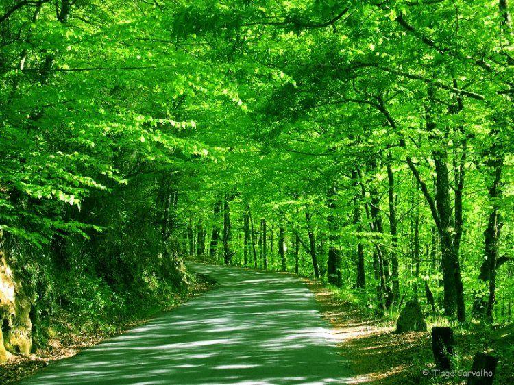 Portela do Homem (Gerês National Park) - Portugal