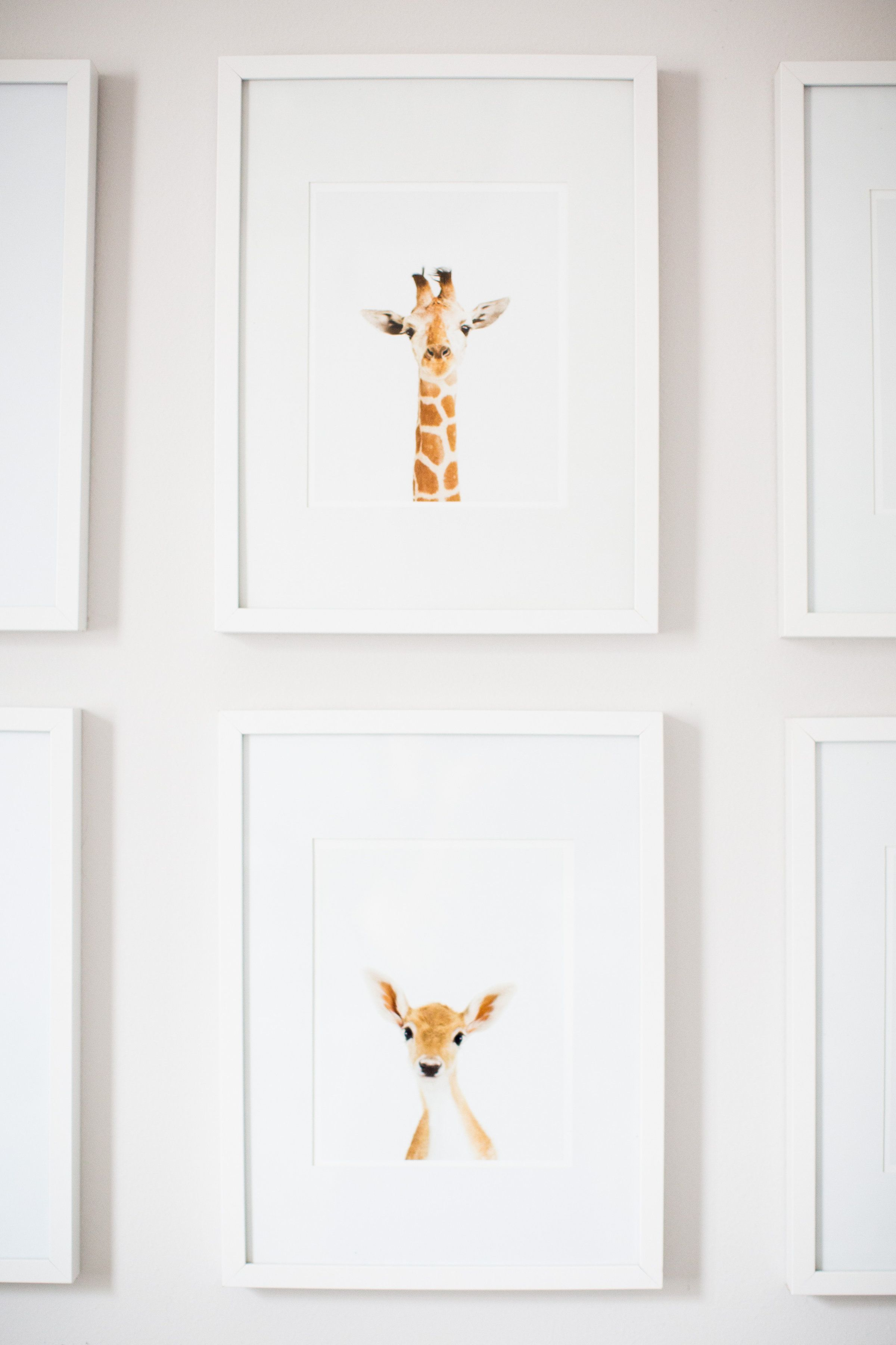 Oh, deer. How sweet is this animal gallery wall?