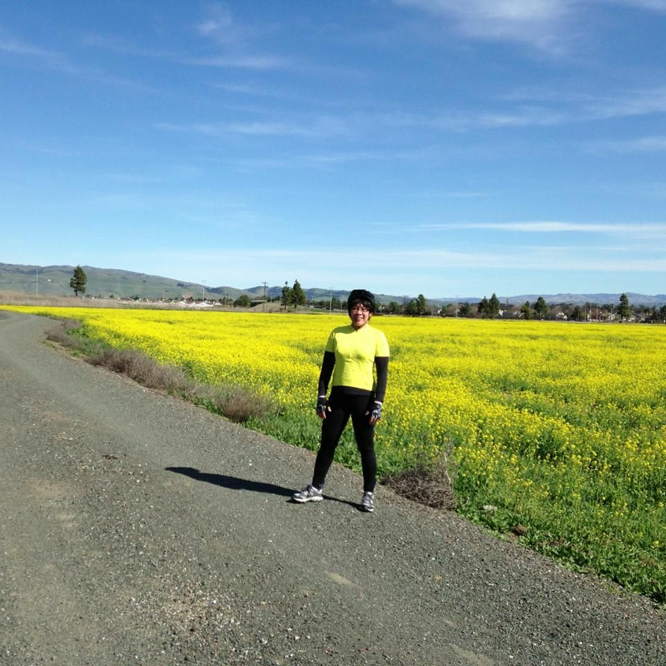 Mustard Fields Fremont Ca Biking And Living Country Roads