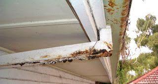 Gutter Guys Adelaide Gutter Repairs And Replacement Services Gutter Gutter Repair How To Install Gutters Ladder Decor