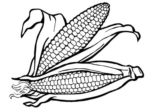 Dibujo Para Colorear Maíz Img 23256   Corn Project   Pinterest ...