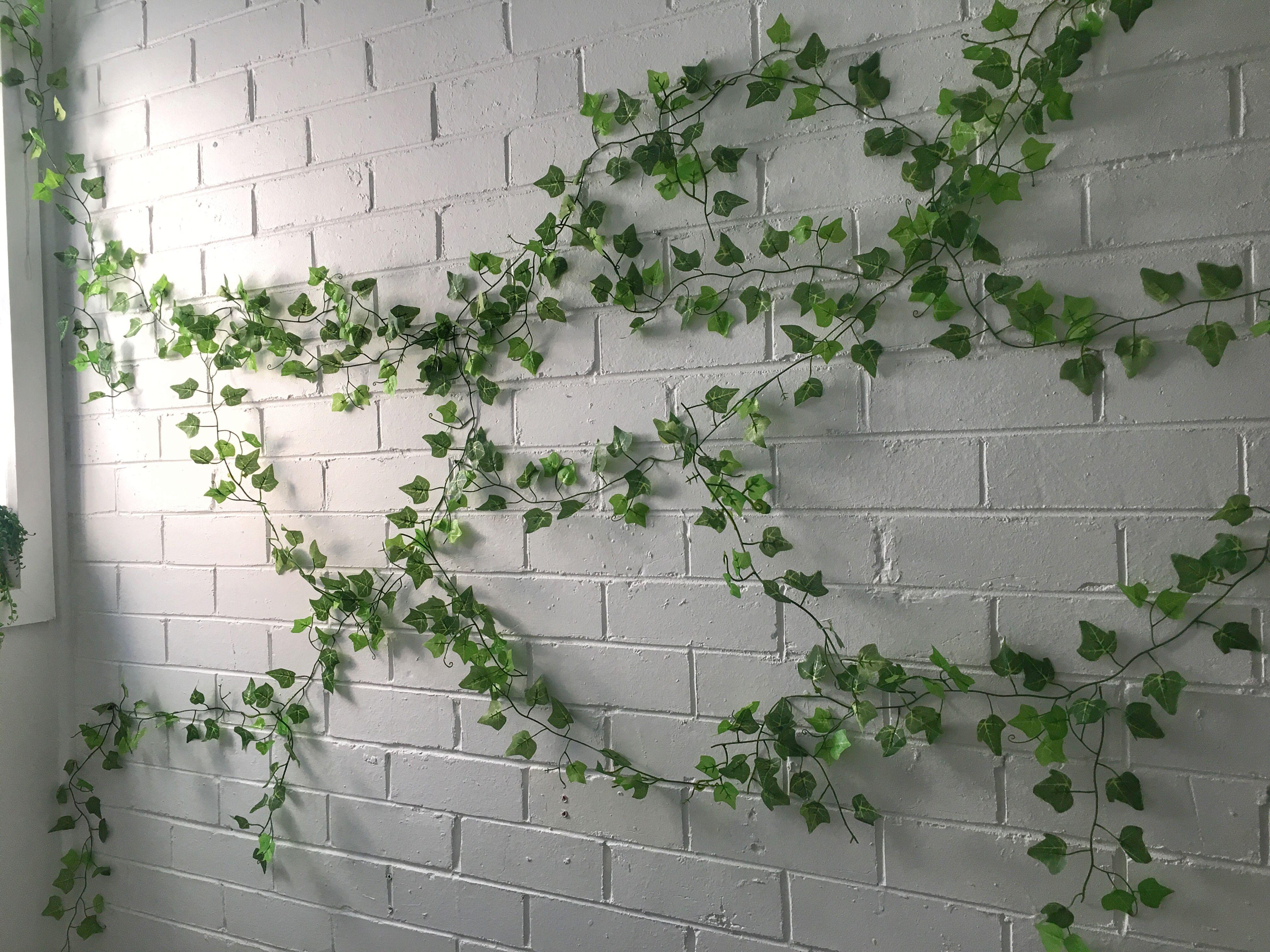 Indoor Ivy Wall Growing On Bricks Greenwall Ivy Wall Indoor Ivy Outdoor Pergola