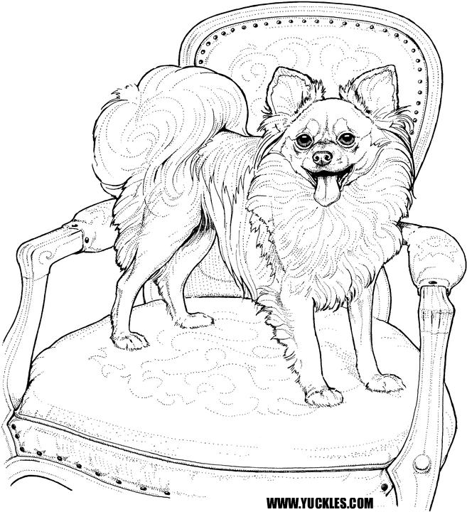 Pomeranian Coloring Page | Animal coloring pages | Dog coloring page ...