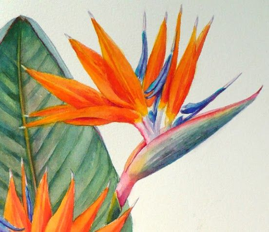 Bird Of Paradise Botanical Painting Strelitzia Reginae Paradise Painting Botanical Painting Flower Painting