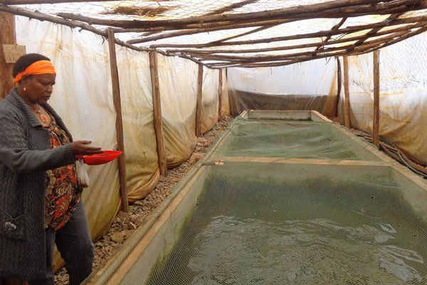 Jane Waruinge, the proprietor of Jasa Fish Farm In Thika