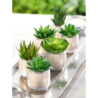 Photo of Brayden Studio Desktop Succulent Plant i potten sett