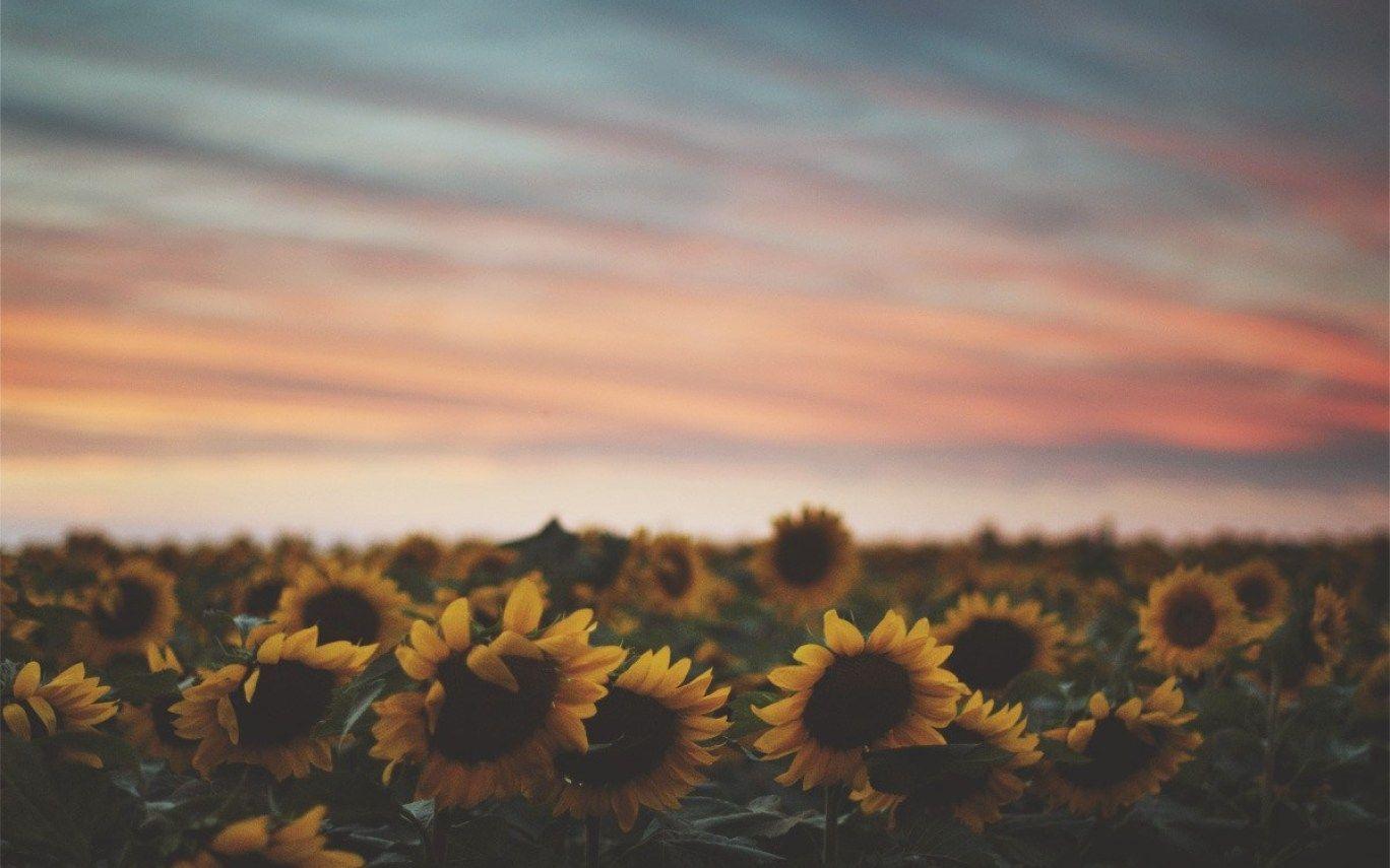 Download Sunflower Wallpaper Landscape Tumblr   Notizbuch ...