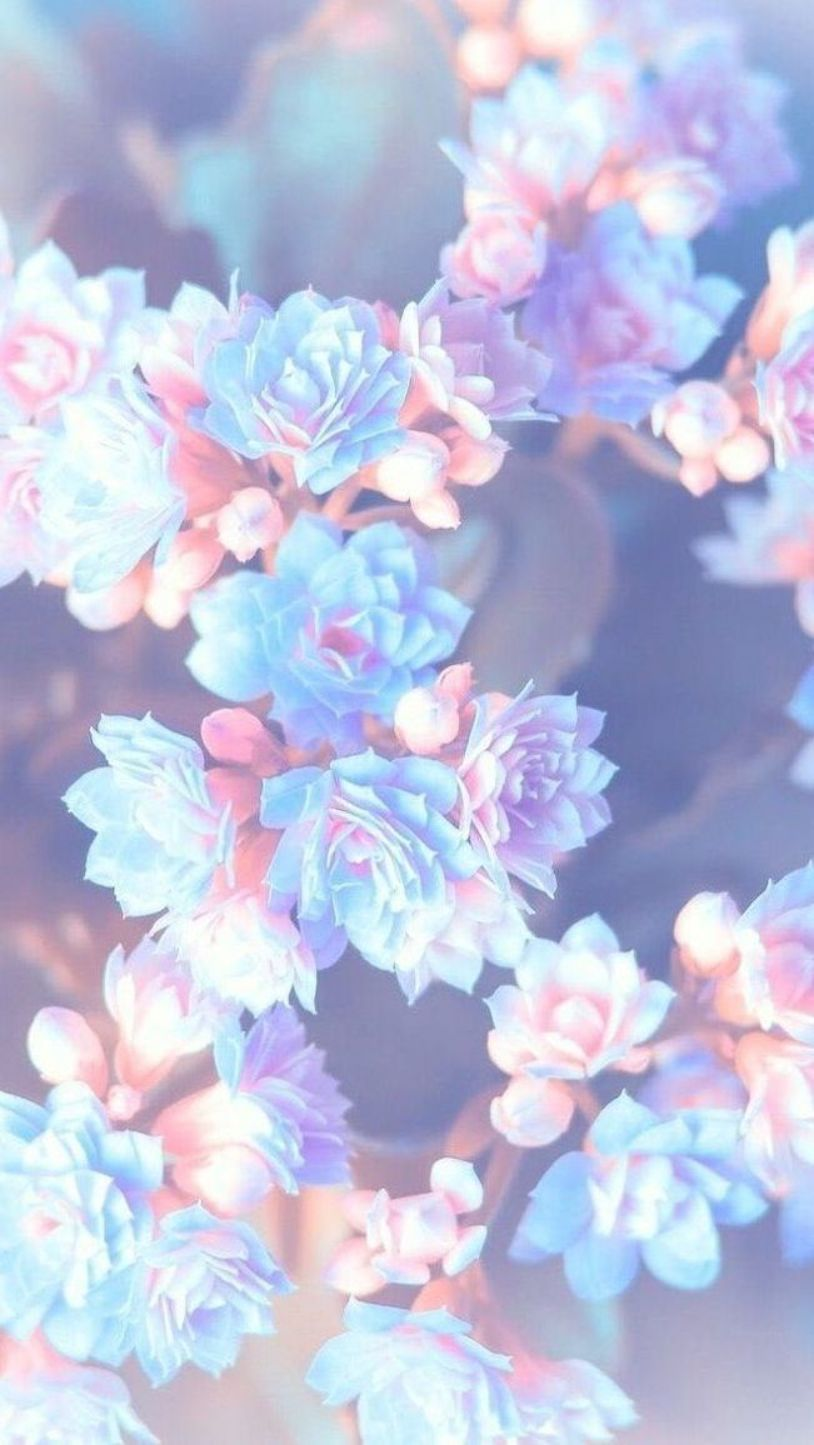 purple pink and blue flowers, blurred background, floral phone wallpaper, happy spring images #blueflowerwallpaper