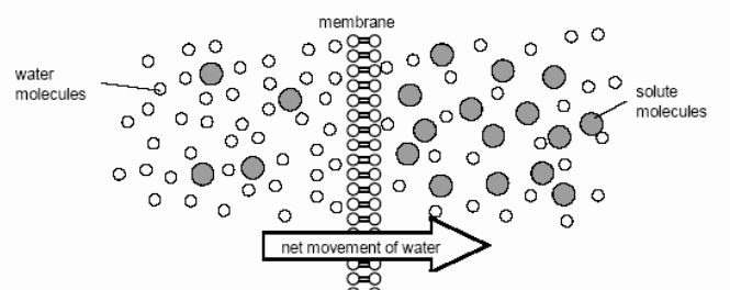 Cell Membrane Images Worksheet Answers Luxury Labeling