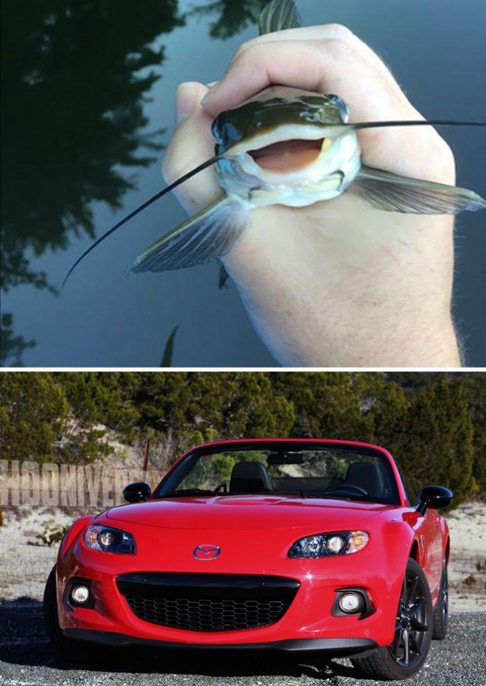11 Cars That Look Uncannily Like Animals Sara Jane Like Animals