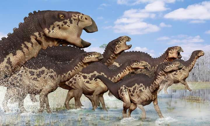 *Edmontosaurus heard. Art by Peter Minister