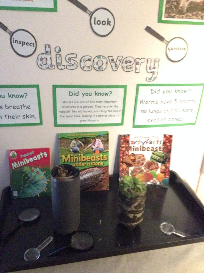 Wormery in our discovery area