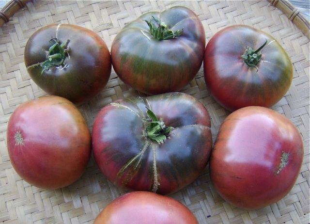 Sarah Black Tomato Coming This Summer After All Black Is The New Red Sarah Black Tomato Plant Sale