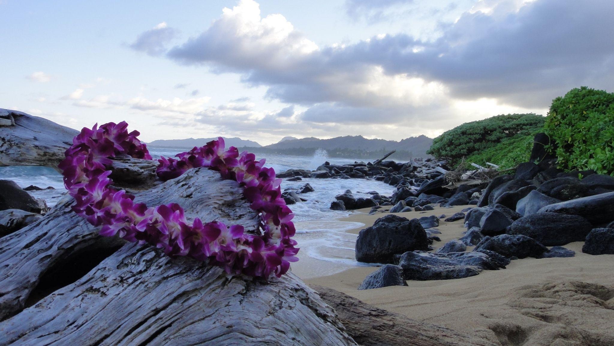главном цветы на острове дени фото майорова