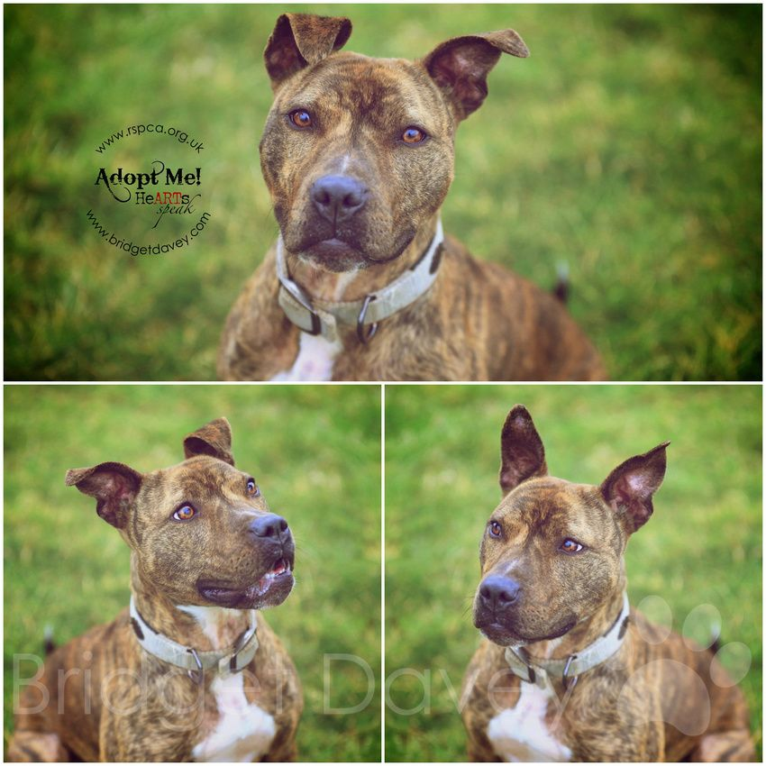 Bia Is Looking For Her New Furever Home Animal Rescue Center Dog Photography Animal Photography