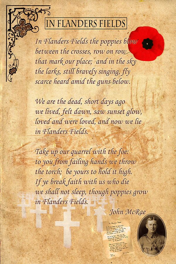 In Flander Field By Andrew Fare 2021 Remembrance Day Quote Poem Paraphrase