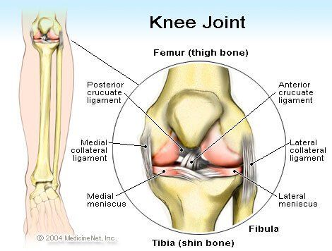Picture of the anterior cruciate ligament (ACL)   Knee   Pinterest