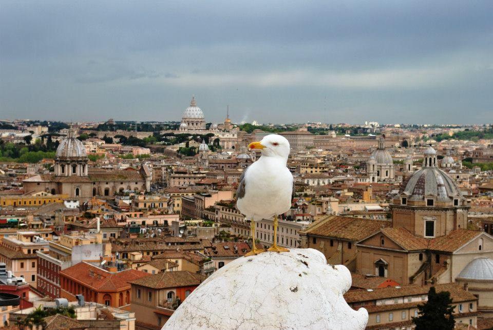 Descrizione: Un Gabbiano domina la Città Eterna appollaiato sulle ...
