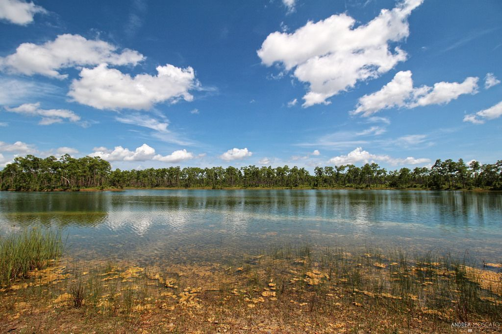 Long Pine Key - Everglades National Park, Florida ...
