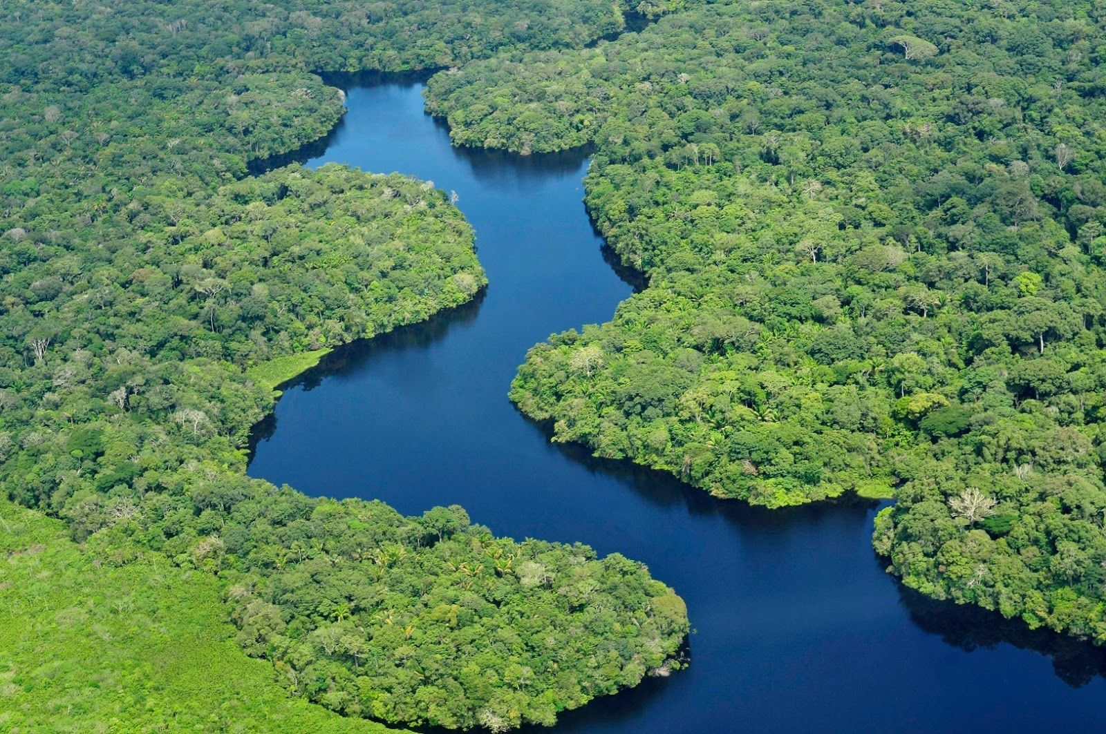 The Amazon River Basin Is Home To The Largest Tropical Rainforest