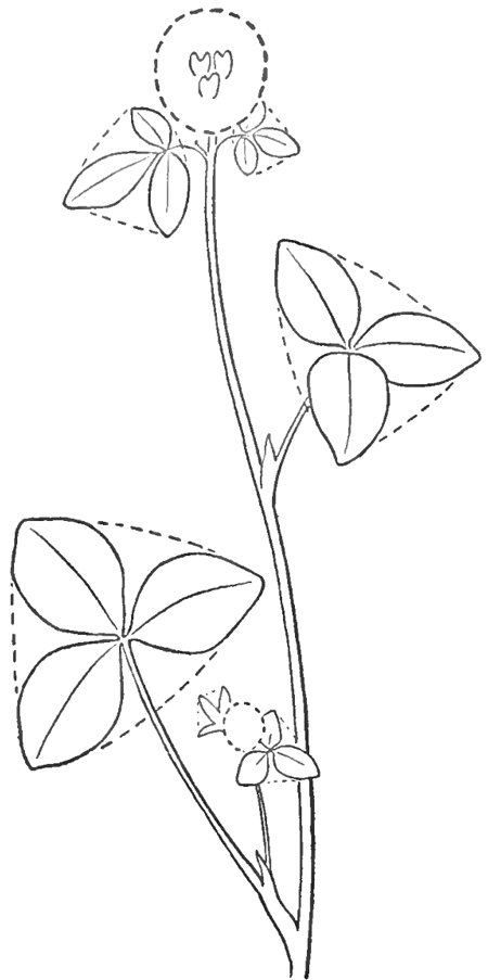 how to draw clover blossoms a flower drawing tutorial how to draw step by step drawing tutorials