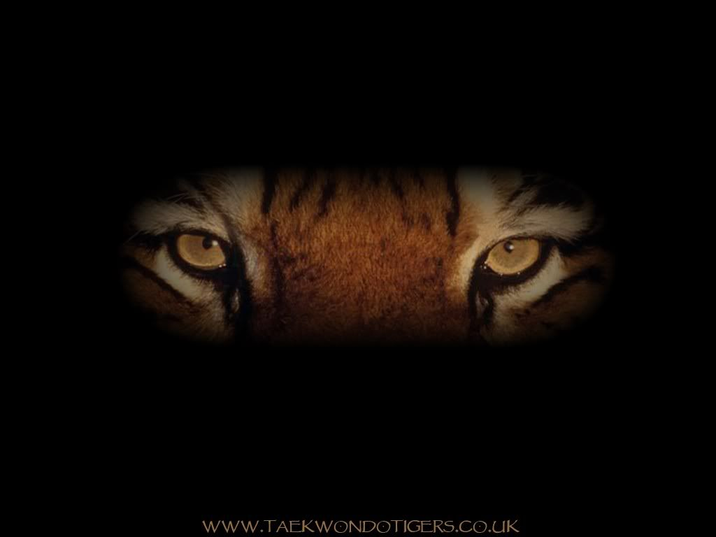 Eye S Of The Tiger Great Song Tigers Tiger Wallpaper Eyes