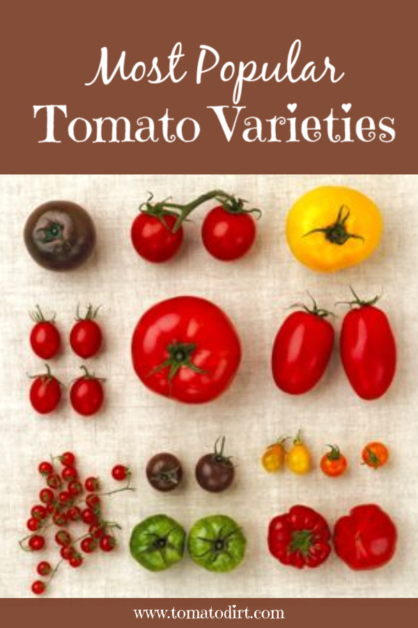 Most Popular Tomato Varieties To Grow In The Home Garden Tomato