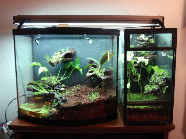 Pin by kristen plescow on vivarium pinterest dart for Fish tank frogs
