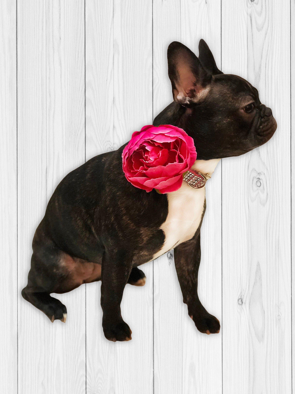 Dog Collar Flower Hot Pink Flower Collar Add On