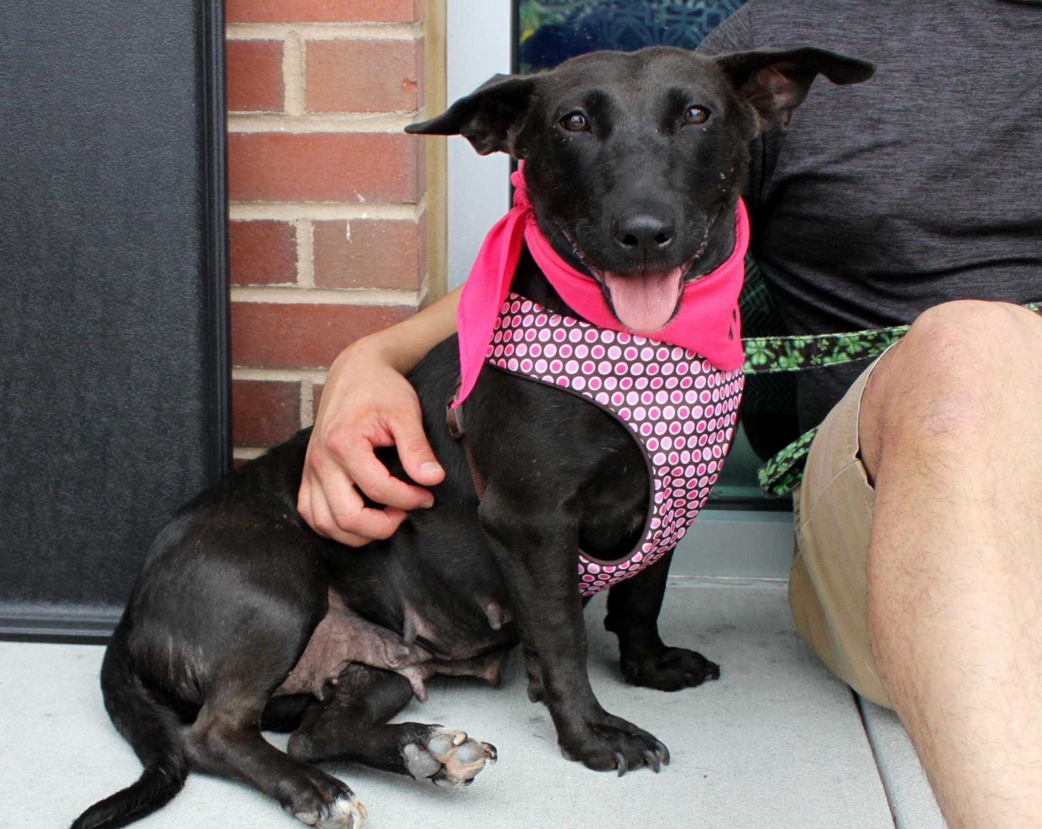 Pet Valu Alexandria Dog Adoption Adoption Event