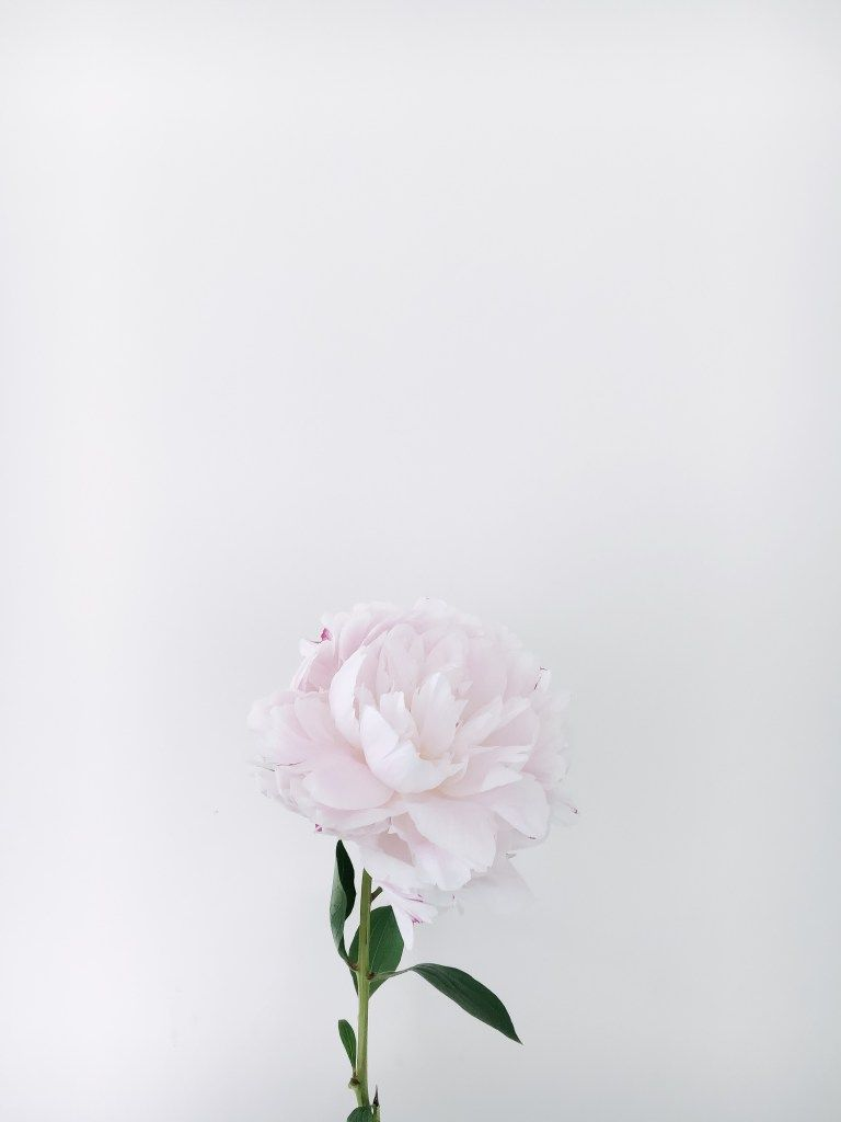 Processed With Vsco With A6 Preset Flower Background Wallpaper Flower Backgrounds Flowers Photography