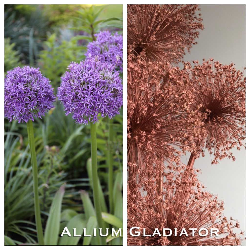 Another Reason To Love Ornamental Alliums Seed Heads With Images Garden Garden Plants Plant Care