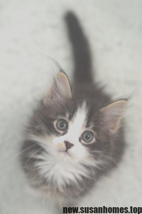 Excellent Absolutely Free Baby Animals Fluffy Thoughts Cute Kawaii Animals Cute Cats And Kittens Cute Animals