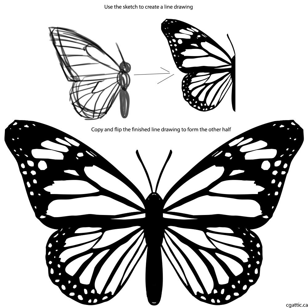 Butterfly cartoon drawing step 2 refine the sketch into a line drawing duplicate and flip over to create the other half