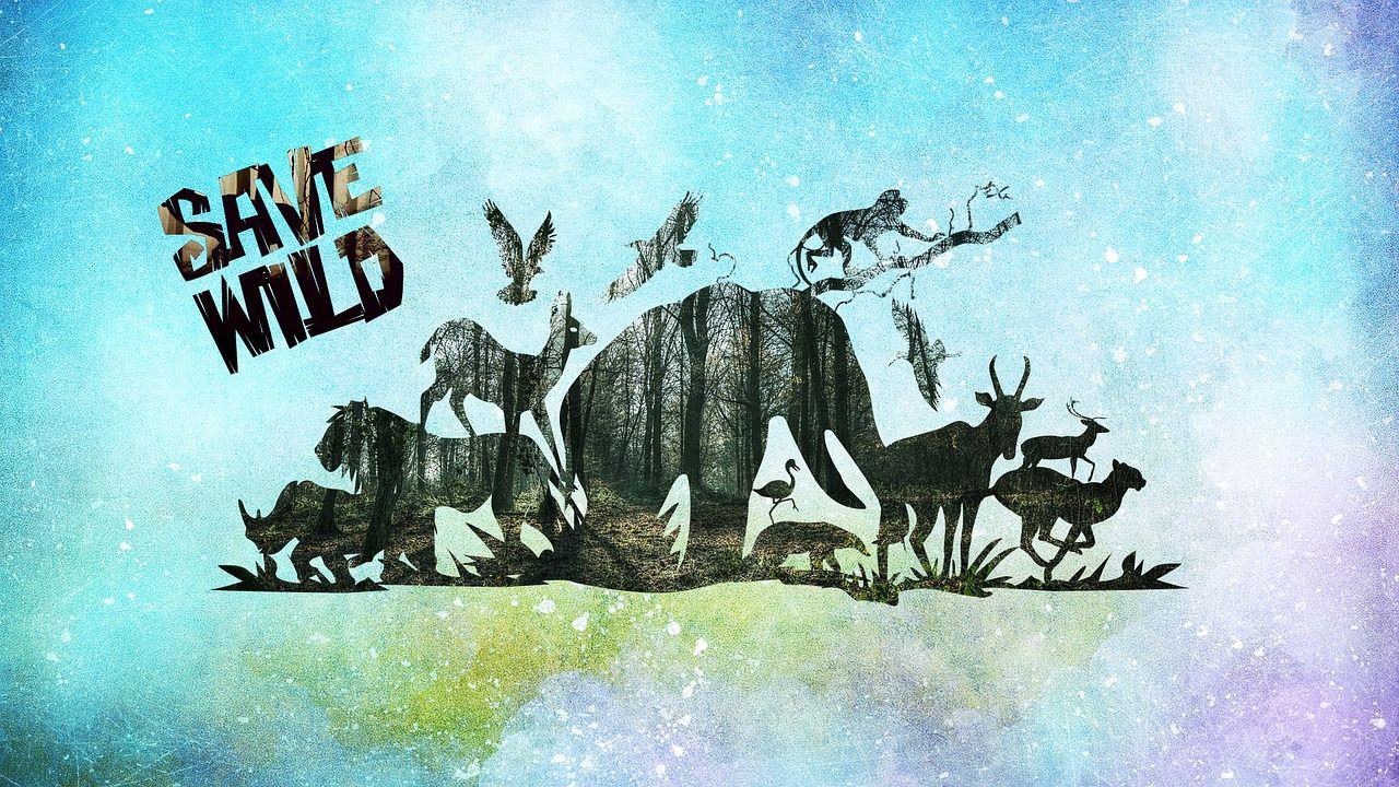 forest wild animals graphics save forest wild animals